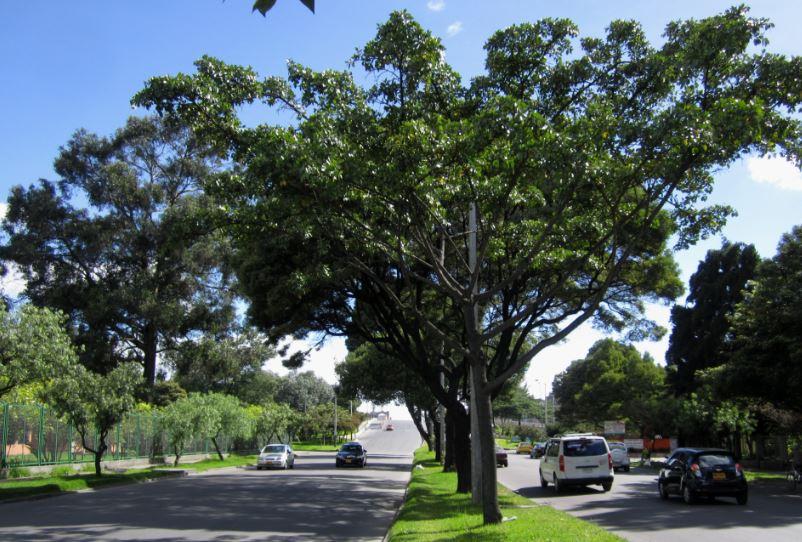 Jard n bot nico ha atendido cerca de rboles for Arboles del jardin botanico