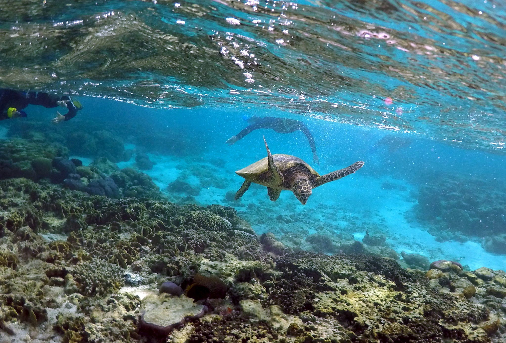 FILE PHOTO: Tourists snorkel near a turtle as it looks for food amongst the coral in the lagoon at Lady Elliot Island north-east of the town of Bundaberg in Queensland, Australia, June 9, 2015. REUTERS/David Gray/File Photo
