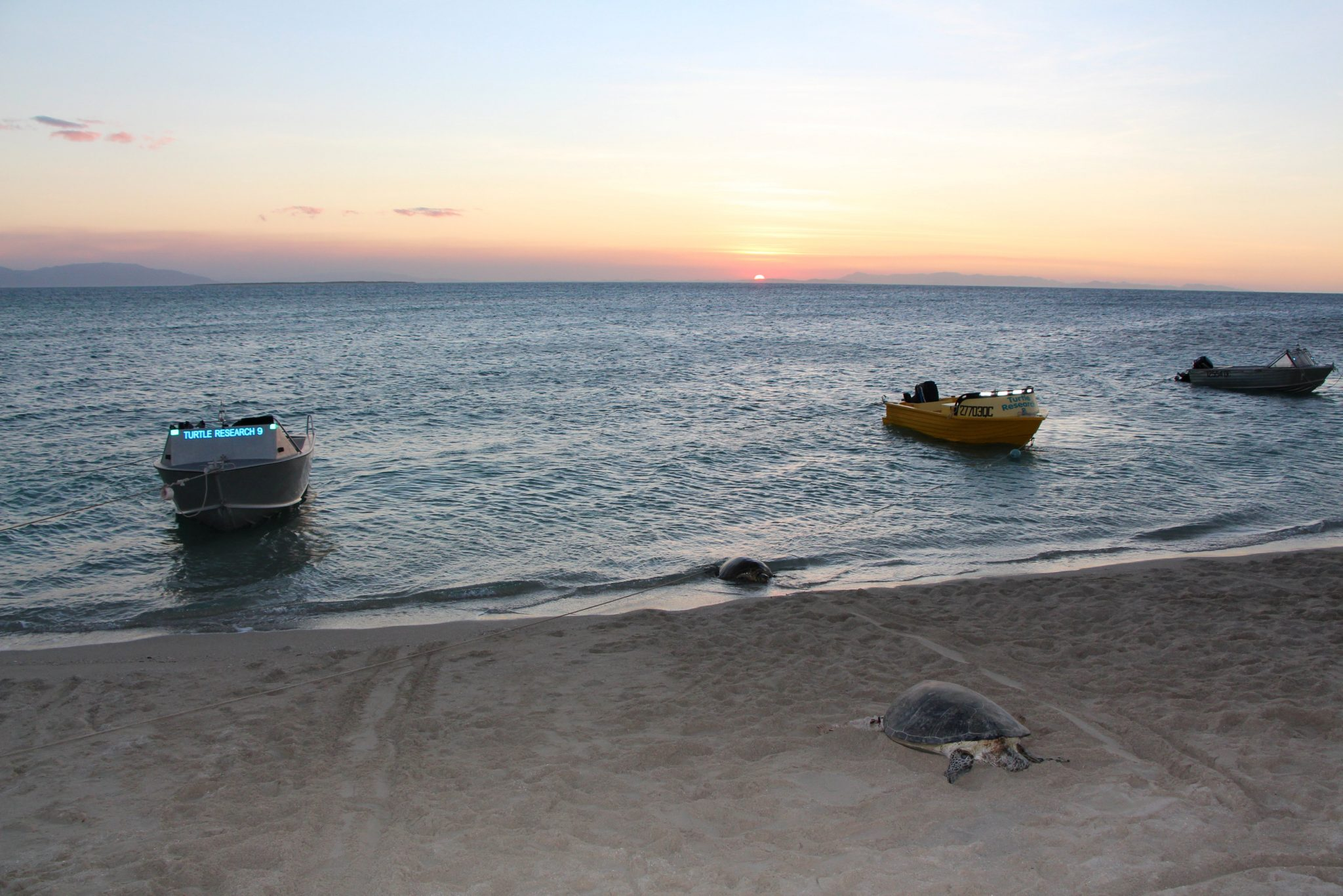 Turtles are seen on the beach at sunset on Ingram Island, Queensland, Australia in this handout photo dated August 28, 2014. WWF Australia/Handout via REUTERS ATTENTION EDITORS - THIS IMAGE HAS BEEN SUPPLIED BY A THIRD PARTY. MANDATORY CREDIT. NO RESALES. NO ARCHIVES.