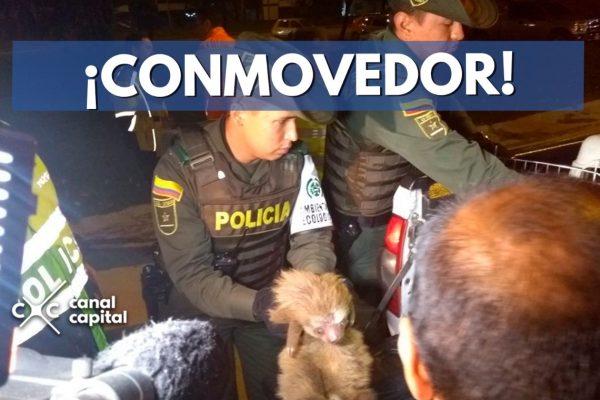 Foto: Prensa de la Policía Metropolitana de Bogotá.