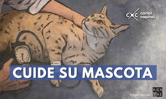 Cuide su gato