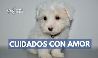 Hoteles para mascotas en Bogotá