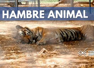animales Venezuela