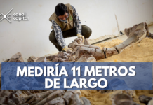 pliosuario más grande del mundo fue hallado en Boyacá
