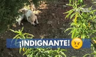perro maltratado en México