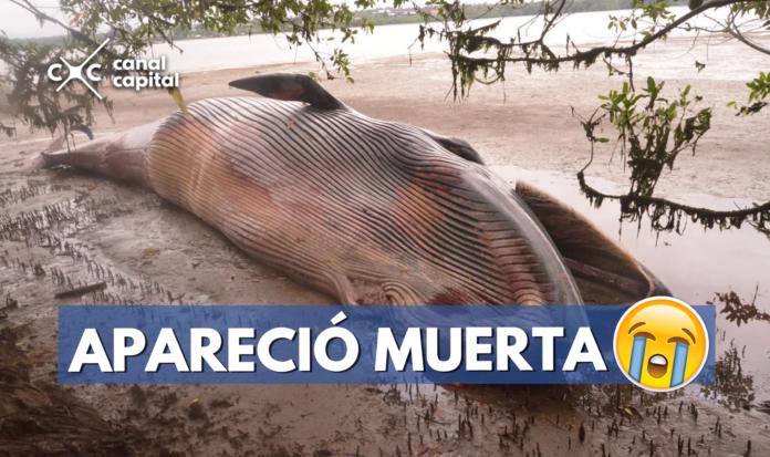ballena muerta en Buenaventura