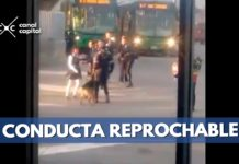 perro TransMilenio