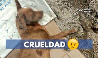 perros murieron envenenados