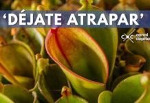 Exposición de plantas carnívoras en el Jardín Botánico