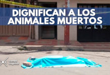 levantamiento forense para animales