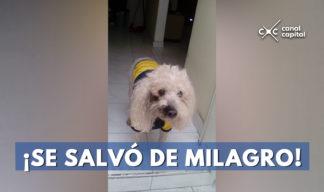 mascota es arrollada por una ruta escolar en Bogotá