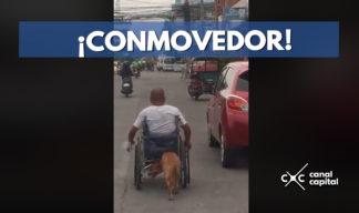 perro empuja a dueño en silla de ruedas