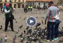 palomas en Plaza de Bolívar