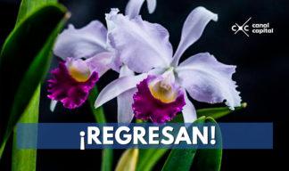 regresa exposición de orquídeas