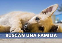 perros buscan hogar en adoptatón