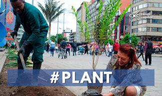 Participa en el proceso de arborización de Bogotá