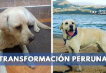 Transformación de animales rescatados en Bogotá