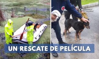 rescatan perrito fuertes lluvias