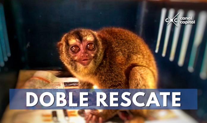 secretaría de ambiente rescata monos