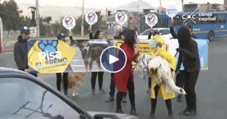 accidentes viales con animales
