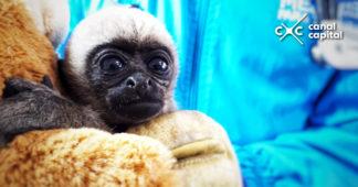 Autoridades rescatan un primate y siete aves silvestres en Bogotá