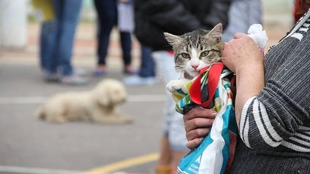 ¡Prográmese! Esterilización gratuita para perros y gatos en Bogotá