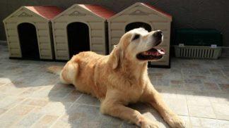 Gran jornada de vacunación para perros y gatos