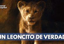 se conoce nuevo tráiler de película El Rey León