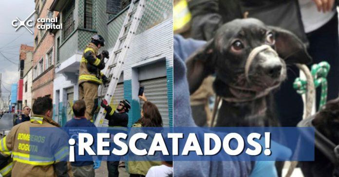 perritos-rescatados