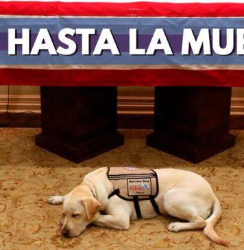 Sully, el perro fiel de George Bush