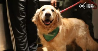 perro rescatado por Instituto de Protección Animal