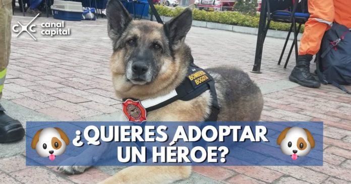 adopta un héroe