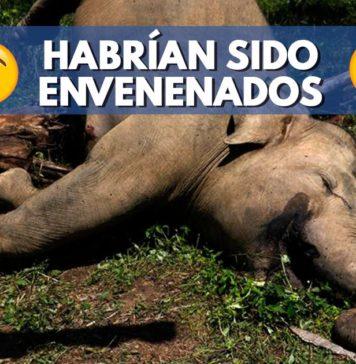 elefantes-envenenados