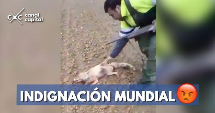 cazador golpea zorro