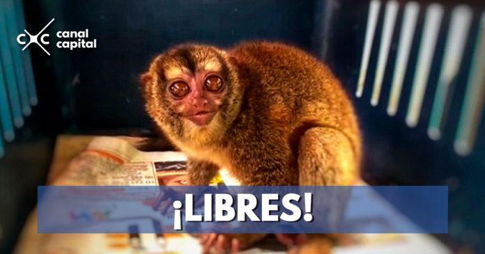 Más de 2.000 animales fueron recuperados en Bogotá durante el 2018