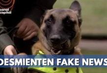 Desmienten muerte de perros antiexplosivos en atentado a la Escuela General Santander