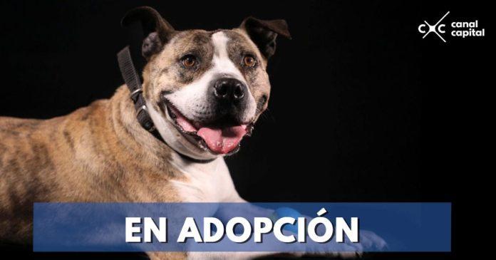 Estos perros en adopción buscan hogar
