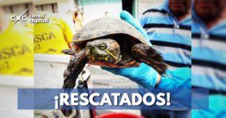 Recuperados 69 animales silvestres que iban a ser traficados en Bogotá