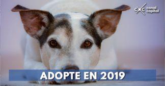 adopción de mascotas en Bogotá