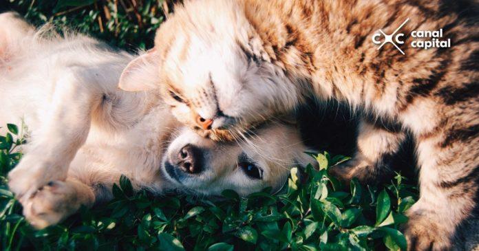 Esterilización de gatos y perros
