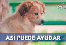 Así puede reportar un animal perdido en Bogotá