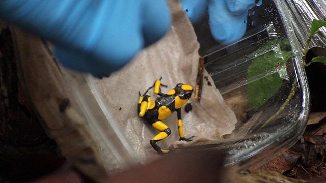 Con operativos de rescate y campañas de prevención, la Alcaldía de Enrique Peñalosa le está haciendo frente al tráfico de animales silvestres en Bogotá, lo que ha permitido que 1.049 fueran liberados nuevamente en sus ambientes naturales tras ser rehabilitarlos.