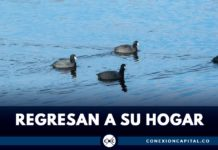 Aves regresan a humedal de Bogotá