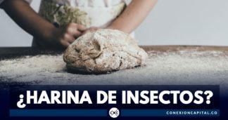 harina de insectos