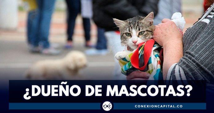 esterilización de mascotas en Bogotá