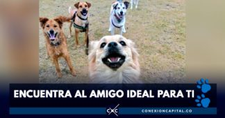 adopción de animales en Bogotá