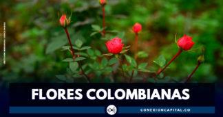 Colombia exporta 35.000 toneladas de flores para la celebración de San Valentín