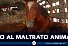 Rescatan 23 caballos maltratados en Bogotá