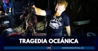 Encuentran 40 kilos de plástico en el estómago de ballena muerta