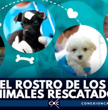 perros rescartados en Bogotá
